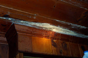 Charlotte Home Inspection Toxic Mold Inspection Stachybotrys